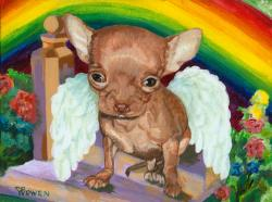 Angel is a Chihuahua who has crossed over the Rainbow Bridge