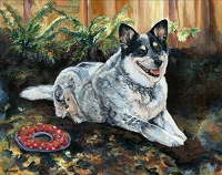 Roscoe is an Australian Cattle dog who loves to play with his red ring toy