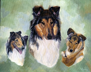 Stubben is a rough coated Collie