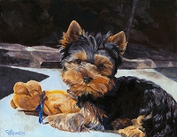 Zoe is an adorable Yorkshire Terrier puppy
