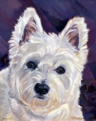 Dog Painting by Connie Bowen of Gracie, a Westie who loves to be comfy! West Highland terriers have such dark, lovely eyes!